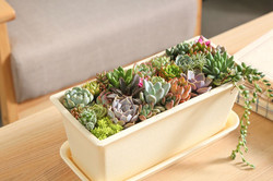 30 succulents in a pot