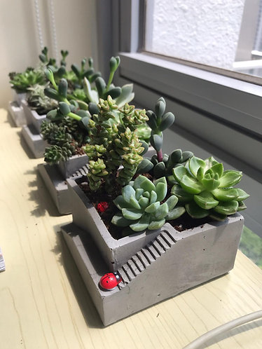 Ready-made succulent set