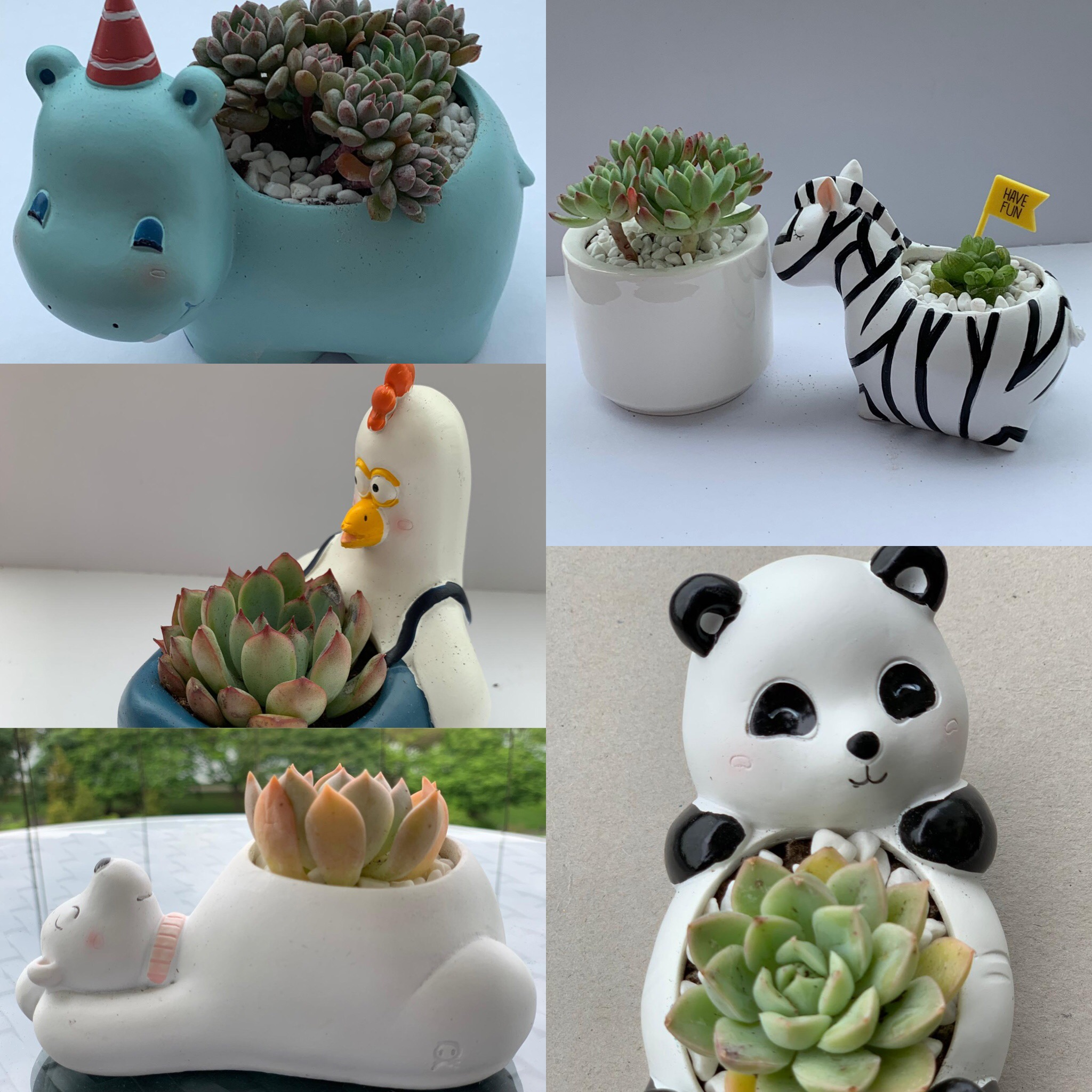 Green Thumb X Animal Pot Succulent