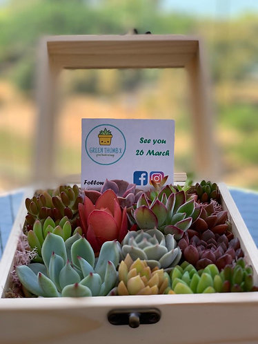 Succulent gift set for wedding, christmas and events