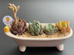 customized succulent gift set