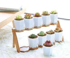 designer succulent pots stand
