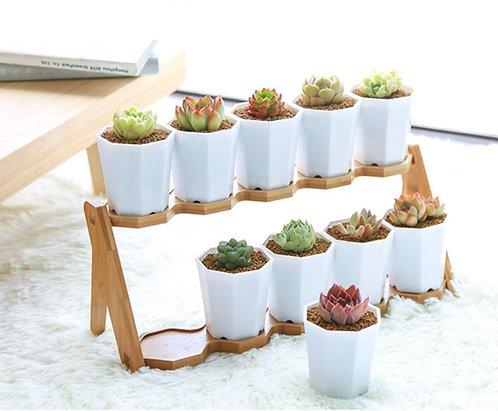 Designer succulent plant pot stand