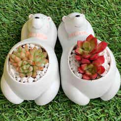 Cute Polar bear Succulent Pot