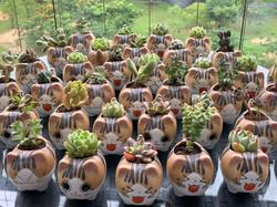 succulent in cat pot