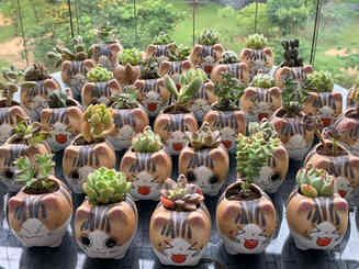 Cute cat succulent pots