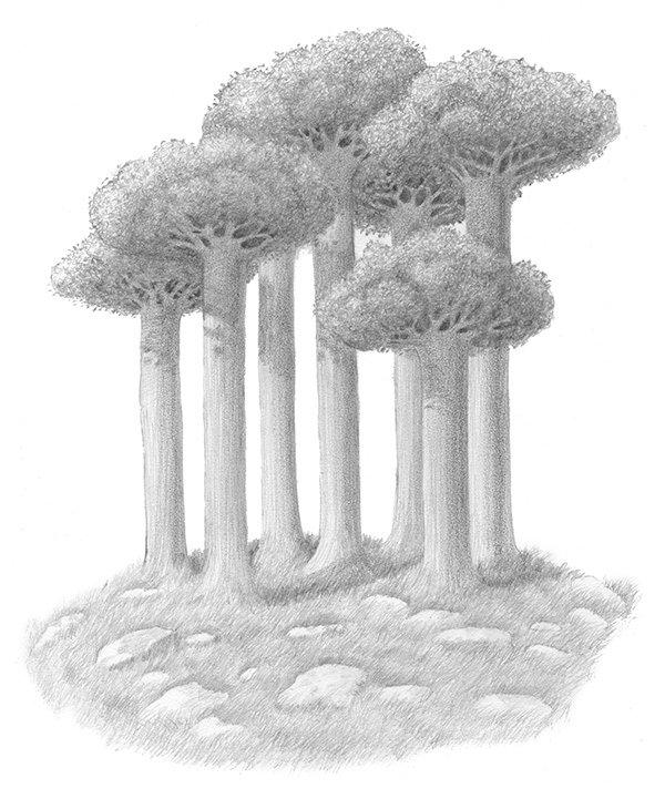 mugma trees.jpg
