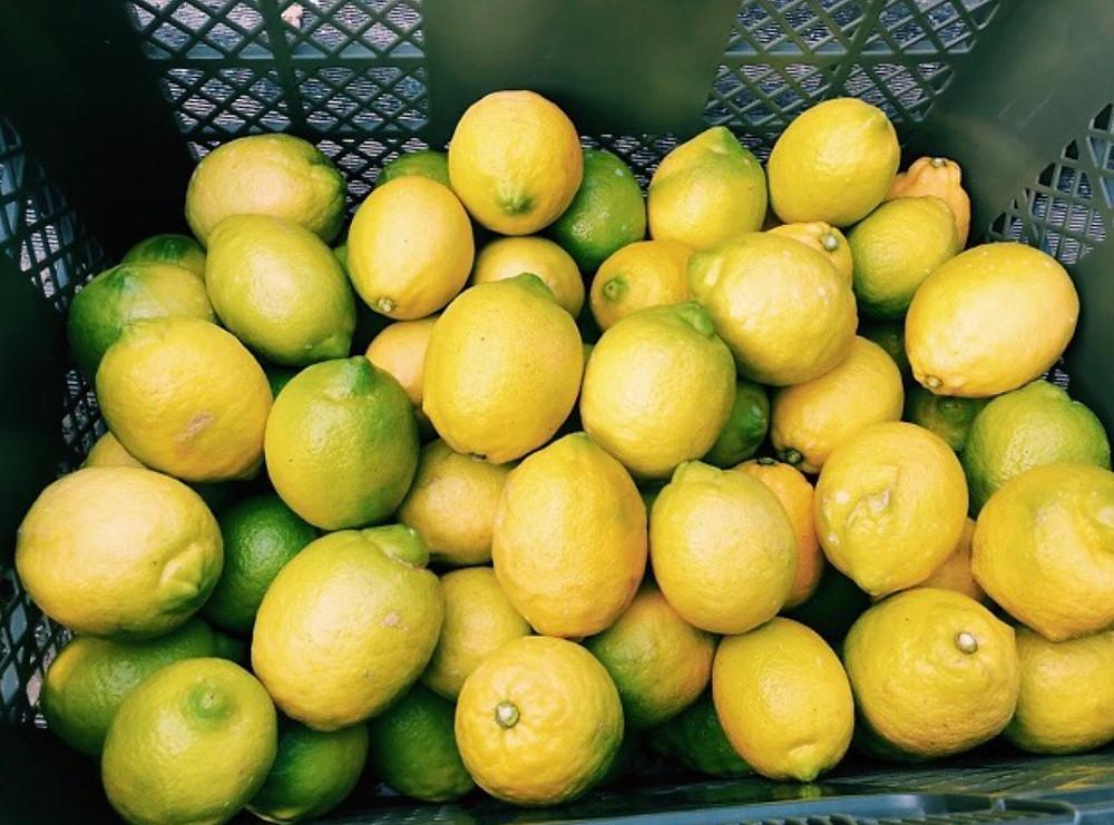 広島オーガニックレモン