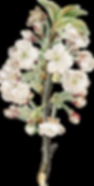 Blumenzweig2.png