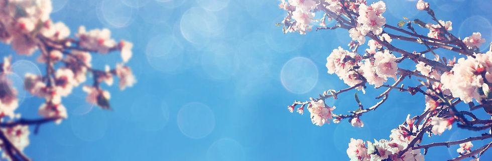 bannière cerisier.jpg