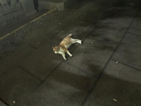 夜の境内で涼をとる―動物たちも大変です