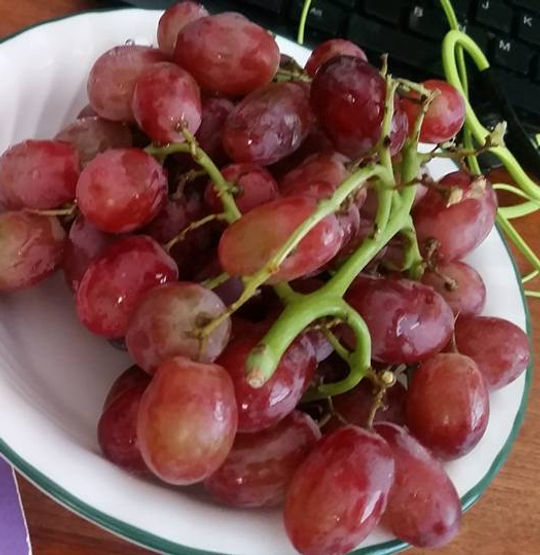 Grape Cure and Grapes