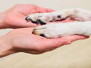jimmy's pawの開業時の思いやコンセプト!初めて飼った愛犬との思い出について