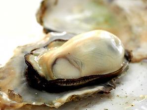 牡蠣にはどんな栄養が含まれている?