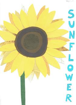 Day 75 - Sunflower