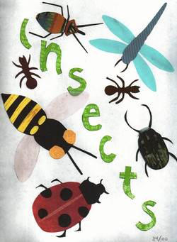 Day 34 - Insects