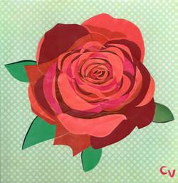 Rosa floribunda