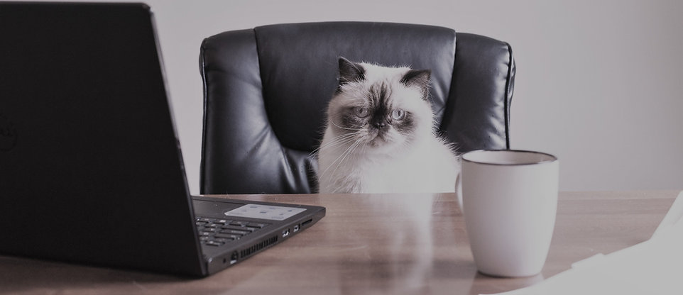 business-cat-in-office_4460x4460_edited_