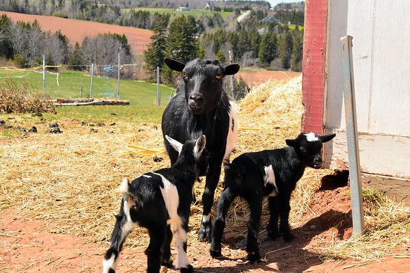 Alexander and Darlene's Farm Haven - Pet