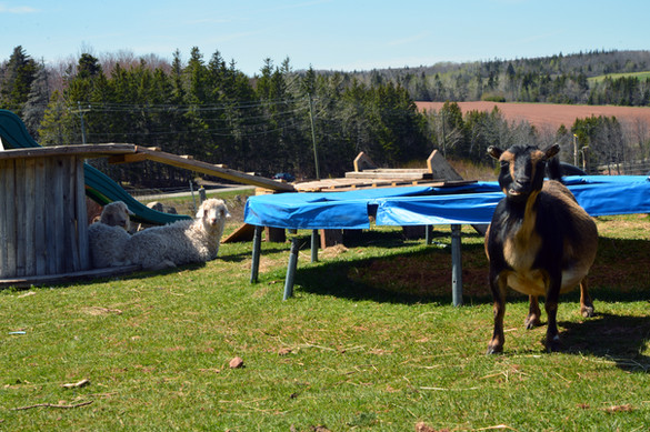 Alex's Farm (1)