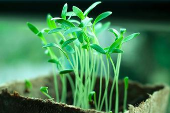 plants-2411458_1920.jpg