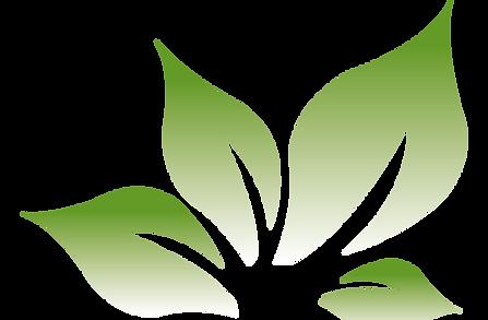 fleur-transparent.png
