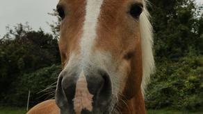 Sponsor a Pony - one year on