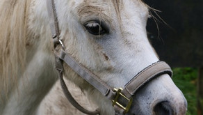 The transformative power of horse riding for children with disabilities - Sheri Johnson reflects