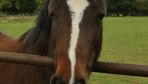 Breaking news! 12 of our 13 ponies have their first sponsor!