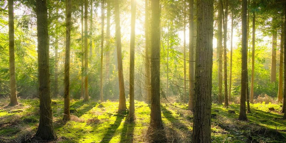 Forestry Week