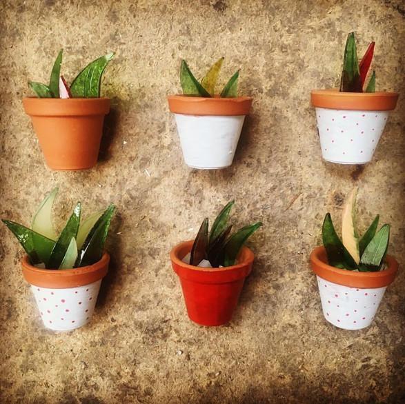 mini plantas.jpg
