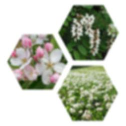 honey tasting spring blossoms