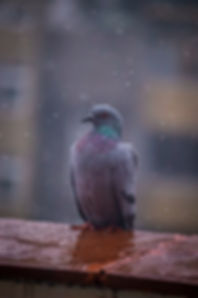 after-the-rain-animal-blurred-background