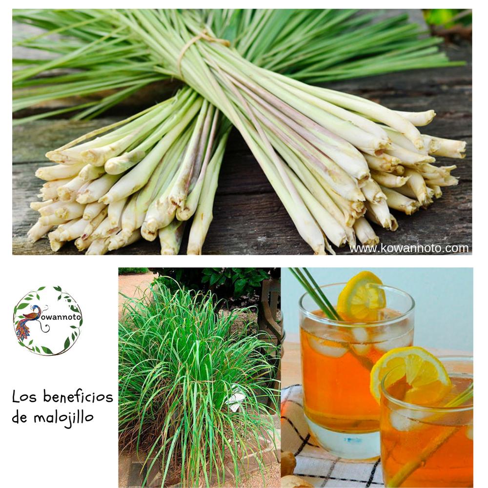 beneficios del te de malojillo y toronjil