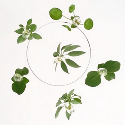 Plant Chandelier