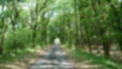 Photo chemin de randonnée