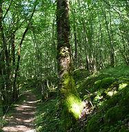 Photo sous-bois et sentier de randonnée