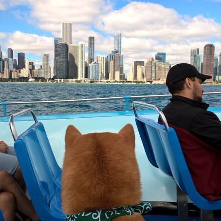 ペットと一緒にクルージング。土日朝限定の「シカゴ川・ミシガン湖クルーズ」はペット天国!