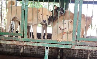 Dog-Meat-Auction.jpg