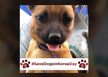 savedogsinkoreaday.PNG