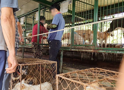 Dogs-being-auctioned.jpg