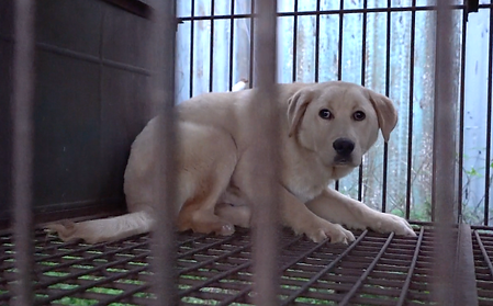 Auction-house-Icheon-lone-dog-in-cage-1.png