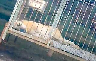 Nakwon-dog-lying-down-1000x640.jpg