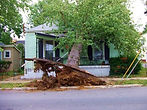 Shults tree service tree on house