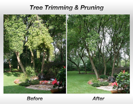 Shults tree service Tree Thinning