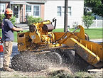 Shults tree service stump grinding