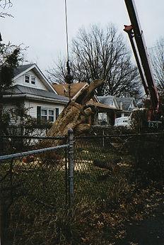 Shults tree service crane removal