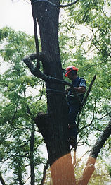 Shults tree service