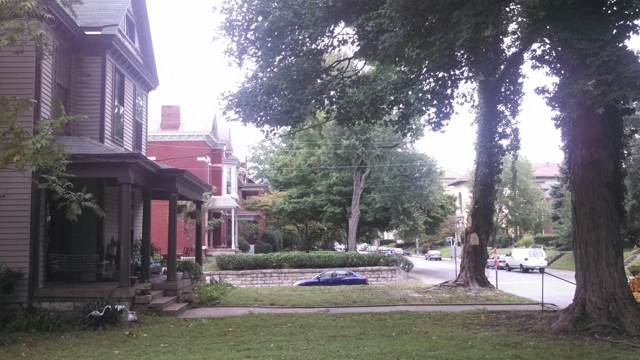 Clean yard
