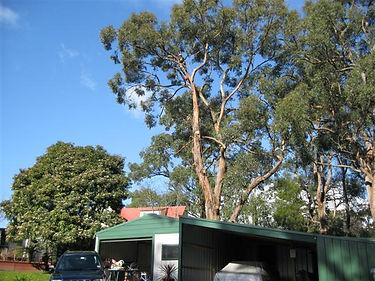 Tight Spot tree